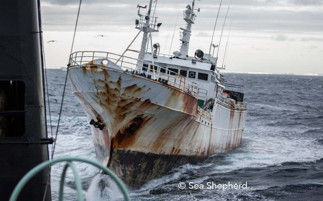Lack of Jurisdiction in Criminal Proceedings Regarding IUU Fishing and Related Crimes