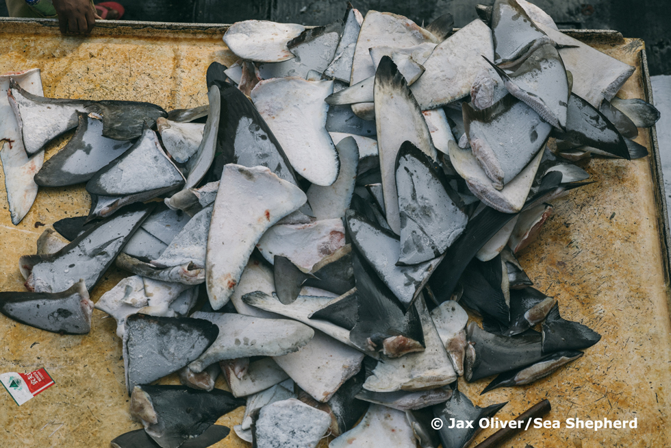At-sea inspections reveal shark-finning practices in the Western Indian Ocean
