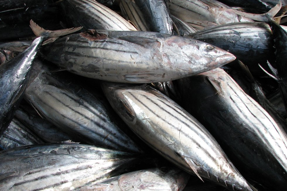 Collaboration and cooperation in Western Indian Ocean tuna fisheries management
