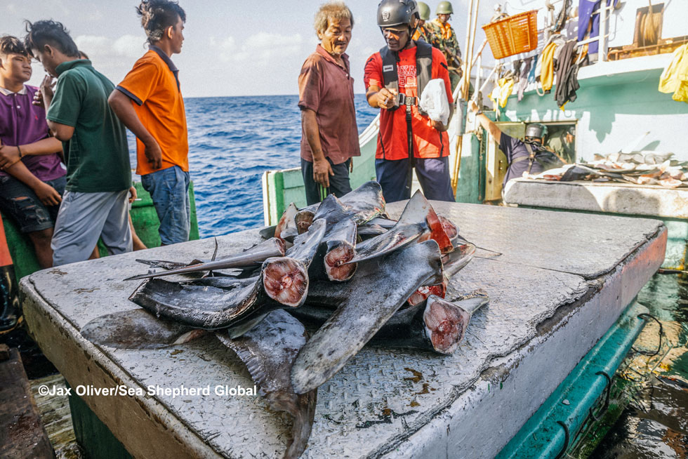 Tanzania convicts captain, owner and agent of BUAH NAGA NO 1 for unlawful shark finning